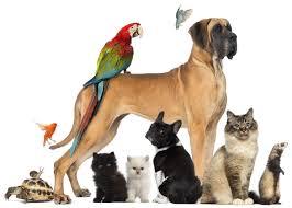 animales de compañía y las comunidades de propietarios