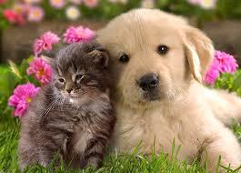 Prohibición de animales en la comunidad de propietarios